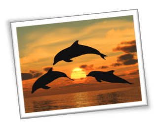 Enjoy our sunset dolphin cruise on Hilton Head Island