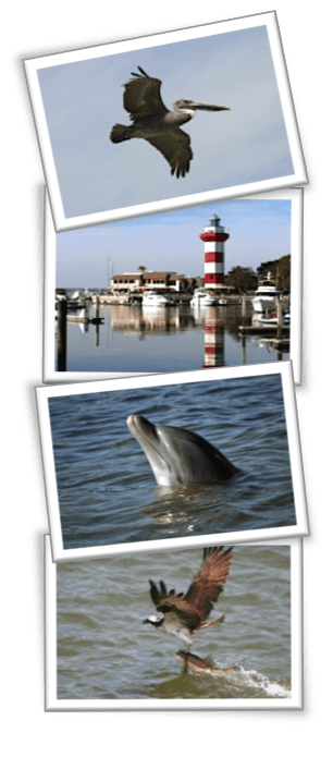 Dolphin tour photos from 90-minute cruise including bottlenose dolphin, pelican, egret and lighthouse.