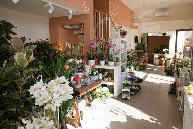 Delle piante e dei vasi di fiori