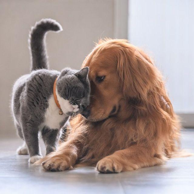 Pet Clinic – Tucson, AZ – ABC Pet Care Clinic