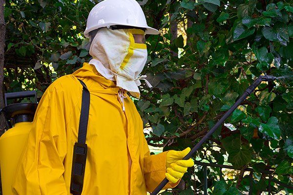 Effettuiamo servizi di pulizia e mantenimento di giardini