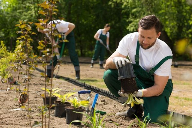 Bemus Point, NY Property Management - R&R Landscaping