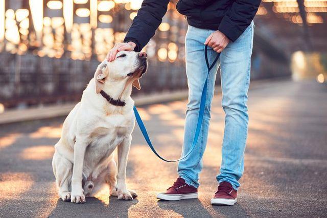 Safe Pet Care Warren Oh Champion Animal Hospital