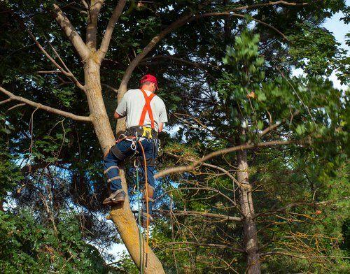 Tree stump service in Cincinnati, OH