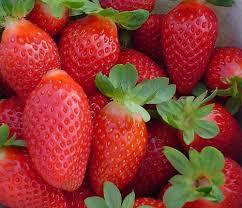 Swistak Farm U-Pick Strawberries