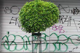 Graffiti Removal | Graffiti Removal Adelaide | Graffiti Removal Melbourne
