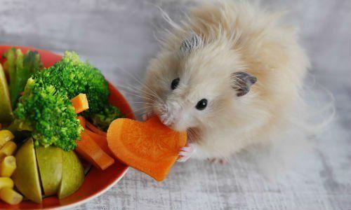 un topo che mangia una carota