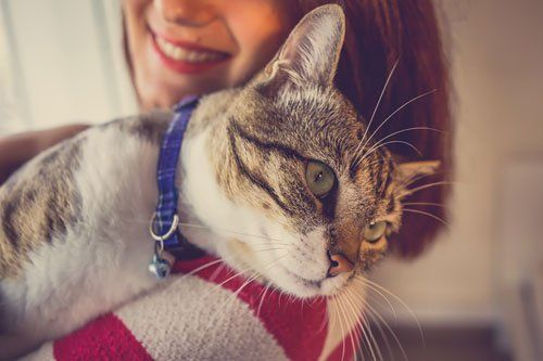 gatto appoggiato affettuosamente sulla spalla della padrona
