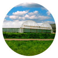 single span polytunnels icon