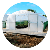polytunnel in a garden