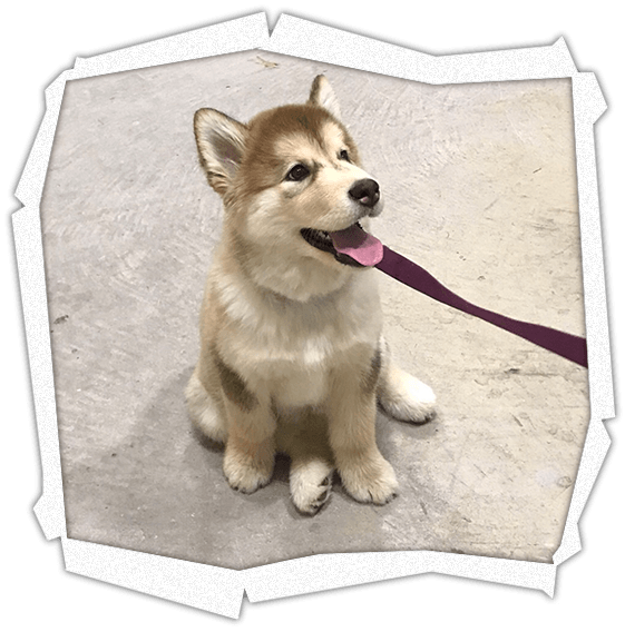 Puppy Training Classes Pampered Pets Dog Grooming And Training