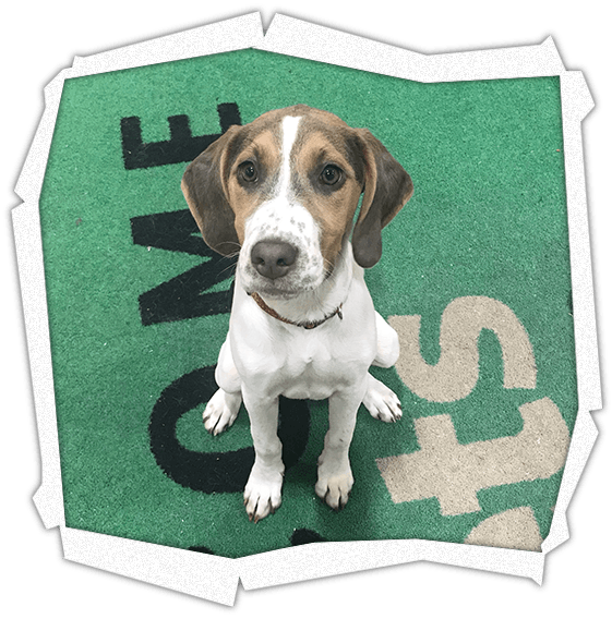 Dog Training Classes Pampered Pets Dog Grooming And Training