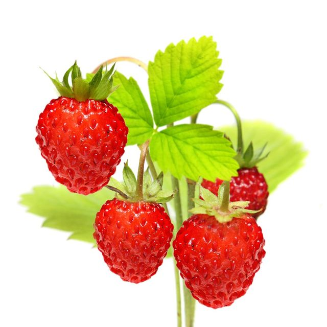 Flavourings | UK and Europe | Flavour Factory