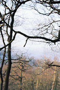 Tree Removal Little Rock