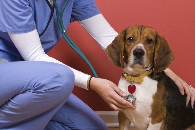 Veterinarian giving a puppy a check-up in Amelia, OH