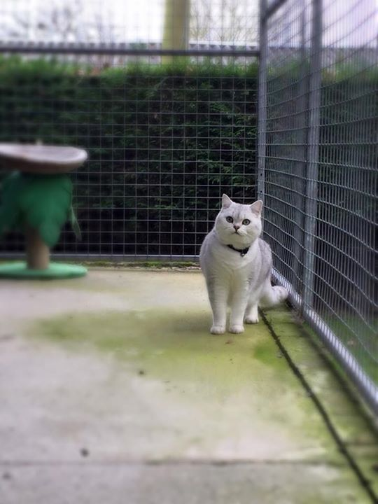 Cat in the cattery