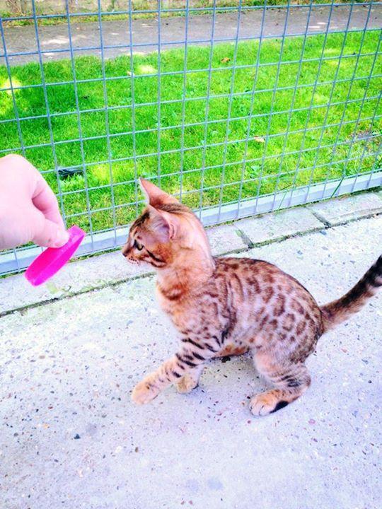 Kitten in a cattery