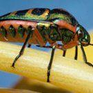 termite-control-extermination