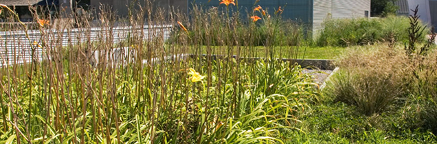 Biodiverse green roof