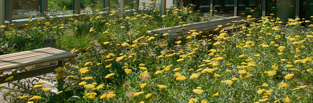 Floral roof garden and benches