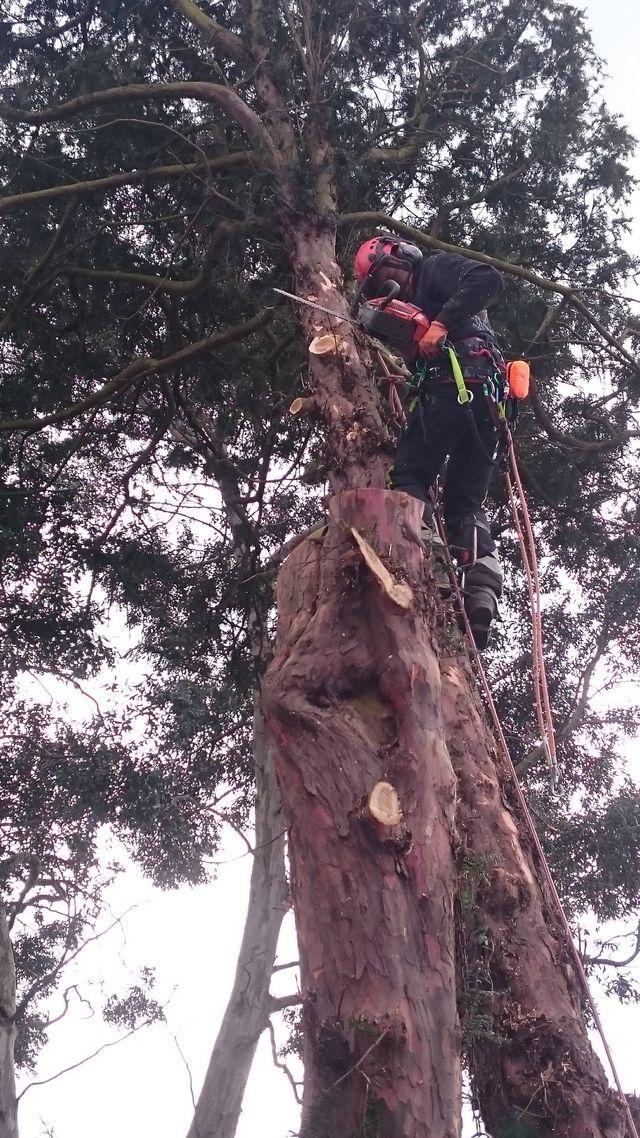 Tree maintenance services