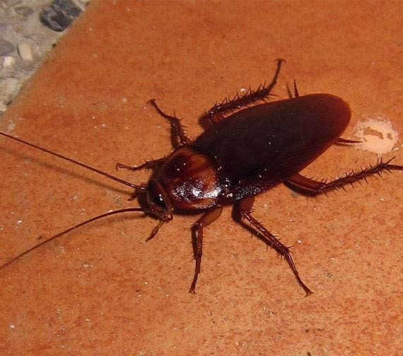 get rid of icky cockroaches