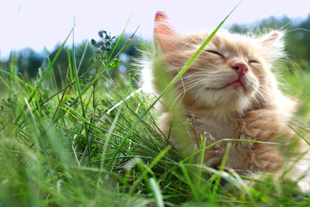 cat closing its eyes