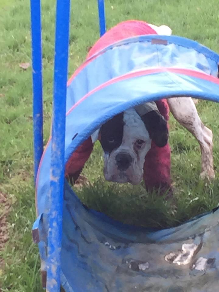 dog taking shelter