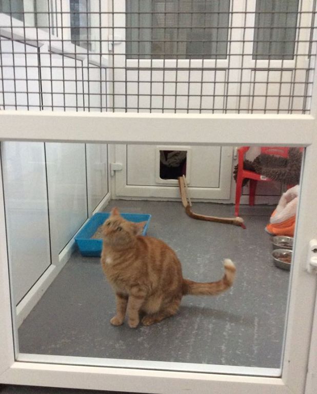 cat inside the cattery