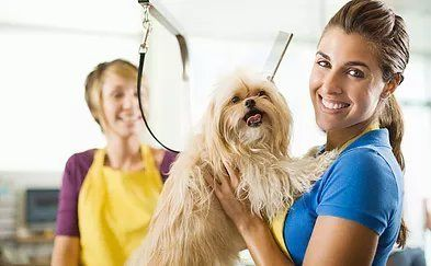 Haircuts for puppies