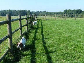 Dog grooming - Ripon, Thirsk - Wilderbrook Kennel - Landscape