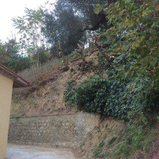 centro servizi di ciolfi stefano potatura piante e alberi