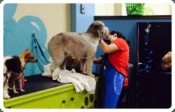Self serve dog wash centennial co bark n wash dog grooming dog groomer in centennial co solutioingenieria Choice Image