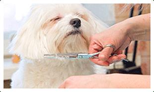 Pet groomer centennial co bark n wash hair trimming dog groomer in centennial co solutioingenieria Choice Image
