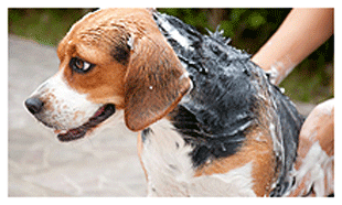 Pet groomer centennial co bark n wash soaped dog dog groomer in centennial co solutioingenieria Choice Image