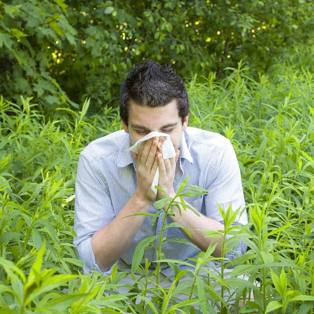 Man sneezing in field of plants