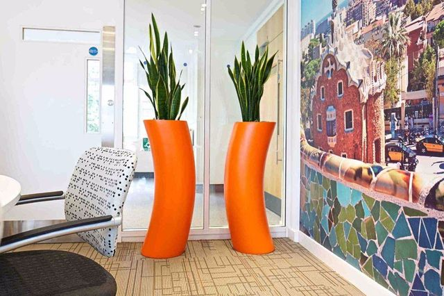 Interior Office Plants In London And Across Uk