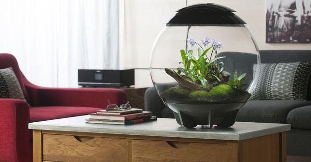 BiORB Terrariums For Offices | Low Maintenance Office Plants