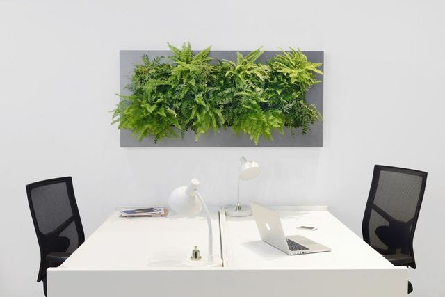 living pictures for offices install maintenance of live green