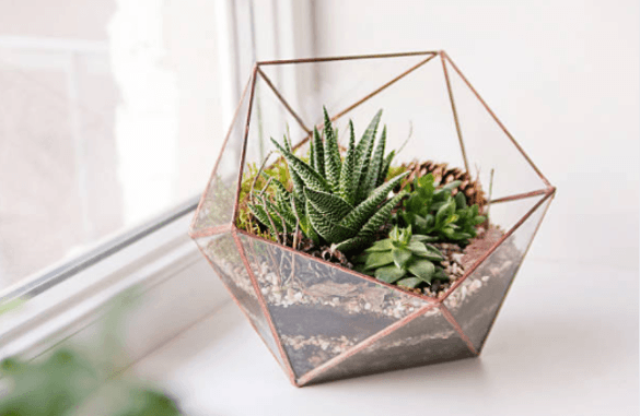 Terrariums For Offices Shelving Plants Office Planting Flowers