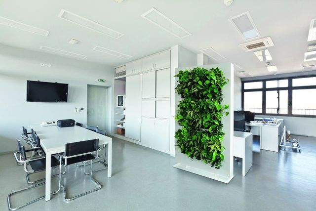 living panels divide your offices with living green partitions