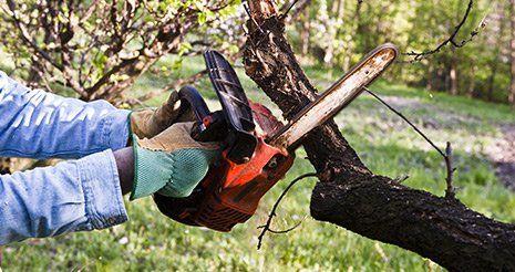 sega taglia tronco di un albero