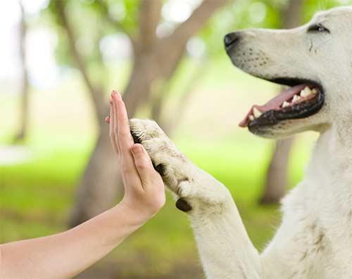 Mano di una persona dando il cinque ad un cane a Stezzano - Qua la zampa