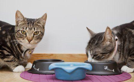 cats boarding