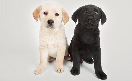 Puppies for sale in Preston