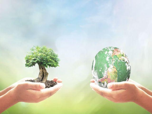 immagine raffigurante due mani tenendo un albero e il globo