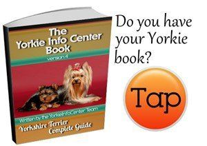 Choosing The Best Carry Method For A Yorkie