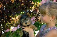 child-holding-yorkie