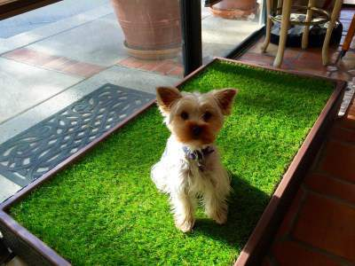 Yorkshire Terrier Travel Tips