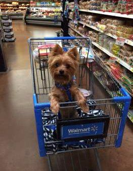 Yorkie trait of alert expression in cart